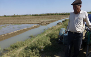Head of Sakarchaga farmers' brigade observing field irrigation. Photo: UNDP Turkmenistan