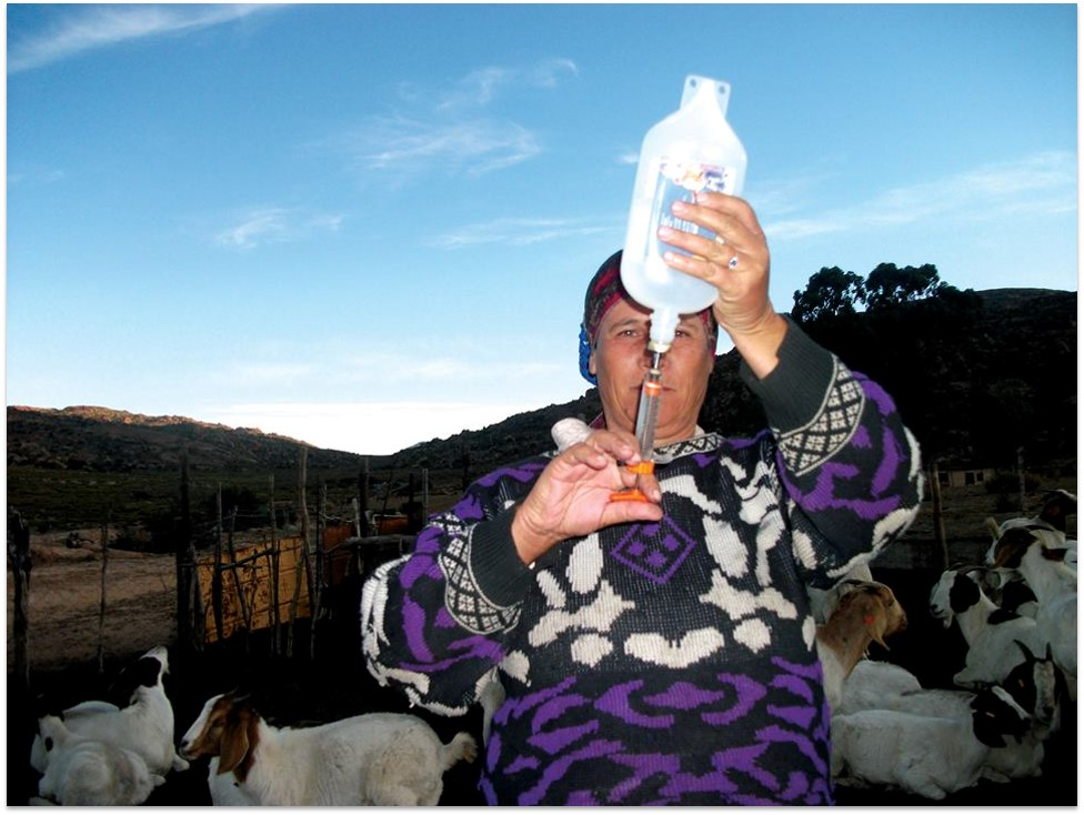 Katrina Schwartz is a livestock farmer who has been involved in the Savings and Credit Groups (SCG's) initiated by Save Act in the village of Leliefontein, Northern Cape, South Africa. Photo by Rouchette Daniels, Conservation South Africa.