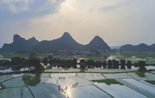Farming and transplanting in fields, Shutterstock / Michel Xu