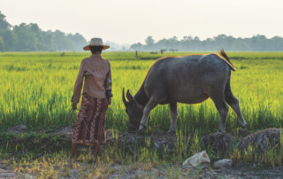 Rice field in Siem Reap, Cambodia, Shutterstock / MinghaiYang